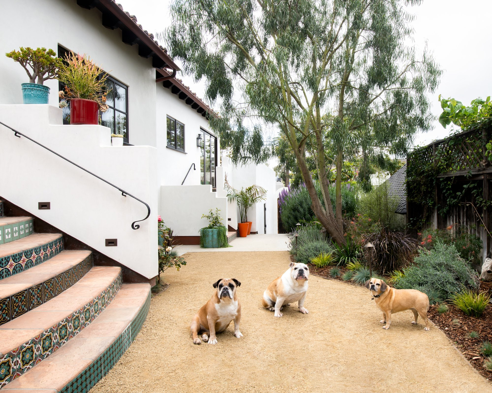 pet friendly classic Spanish bungalow exterior with bulldogs